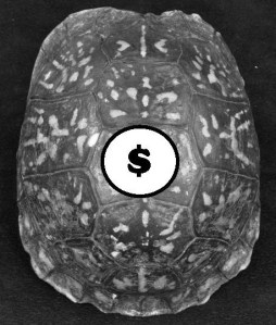 turtle dollar sign